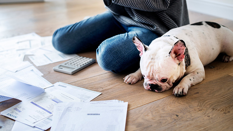 Lifetime Cost of Owning a Dog
